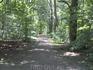 А это уже лес на окраине Лейпцига. В это время года на дорожке было очень много слизняков, немного противно