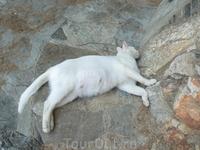 Кошка Агиос-Николаос