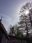 Не сразу поняла, зачем я делала это фото. Потом рассмотрела между шпилем и деревом, высоко  в небе маленький самолётик, похожий на велосипед с крылышками)) ...