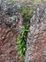 и как из камня может расти травка?