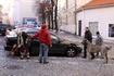 На утро выглянуло солнце и местные жители вышли на улицы со своими питомцами самых разных размеров и пород)