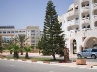 На набережной района Ясмин Хаммамет. Как называются эти елко-хвощи?