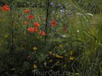 Цветы Словаки