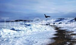 Сахалинская природа