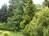 Фотография Ботанический сад в Калининграде