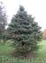 Ботанический сад. Правда елка классная :)
