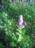Валаам. Цветок. Снято рядом с предыдущим скитом