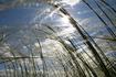 Ковыль - степная трава, возрождаемая на просторах Куликова поля