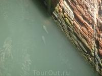 Рыбки в канале.