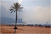 Одинокая пальма - укрытие от южного солнца.