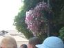 Цветы благоухают под тенью дерева-покровителя