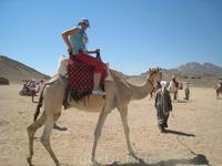 На верблюде в пустыне
