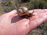 Судя по фауне и вчерашнему дождю на севере пустыни Негев не так уж и засушливо.