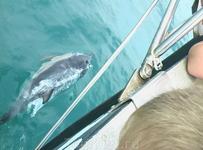 Самое удивительное событие из поездки - встреча в открытом море (была прогулка на яхте) с дельфинами! И даже успели одного из них сфотографировать!