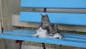 Котята на скамейке.
