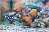 Фотография Алуштинский аквариум