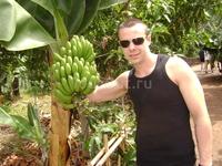 Остров ''Гомера'' фруктовые плонтации