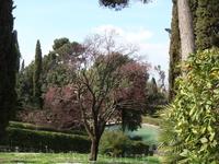 Цветущие деревья парка