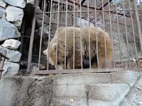 Этому Кавказскому мишке не повезло, поймали. А вокруг в горах полно бродит собратьев. Вольер на самом деле очень большой и он с подругой.
