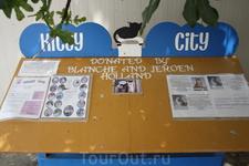 На улицах Паномро есть такие кошачьи скамейки с едой и объявлением, на которых написано, где желающие могут накормить кошек или по определенному адресу ...