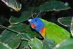 Ты кто????  Лоро парк  расположен в северной части острова и известен, прежде в сего, самой большой в мире коллекцией попугаев (около 500 видов...