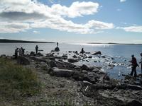 Белое море, ищем гранат, после прилива на берегу можно найти камни с вкраплениями граната ( немного нашли) был отлив((