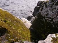 Всё побережье севера Ладоги - это огромные гранитные монолиты...