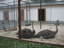 В Лавре есть даже страусы