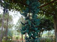 местая орхидея в парке в дзен-буддийском монастыре Чук Лам