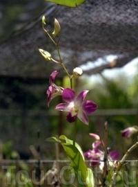 Этнографическая деревня и Сад орхидей в Пхукете
