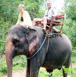 тайские слоны не очень большие
