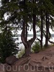 В парке полно деревьев с необычными формами стволов и удивительным переплетением корневой системы