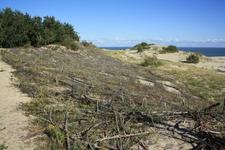 Это не старый забор, это укрепление дюн :)