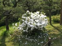 Парк Санкэйэн (Sankeien) известен уникальным подбором цветов, украшающих парк в любое время года