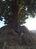 Почтовый ящик под деревом на одной из улочек.