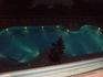 бассейн и новогодняя елка)))