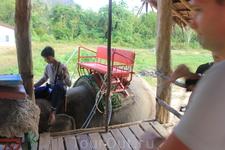Наша слониха