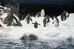Лоро парк. Пингвинарий