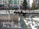 на улицах... г.Хунь Чунь