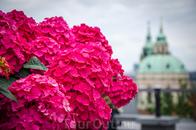 Все таки цветы крупным планом)