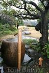 Мокрый сад в Токио