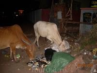 коровы на ужине