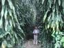 настоящие джунгли