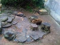 Во рву замка Крумлова до настоящего времени живут медведи.