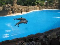 Канарские острова. Тенерифе. Город Пуэрто де ла Крус . Во время шоу дельфинов в парке Лоро