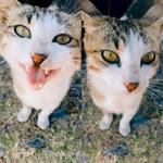 Олимпийский кот, который охраняет жертвенник