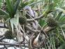 Плоды диковинных растений