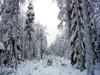 Зимний лес в окрестностях Рованиеми