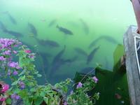лагуна с рыбками на территории отеля