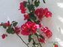 цветочки на стене  нашего бунгало